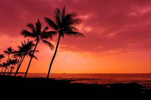 Κόνα (Χαβάη): Ηλιοβασίλεμα, φοινικόδεντρα και ωκεανός. Εκεί ζουν τα πιο σπάνια και παράξενα ψάρια του πλανήτη. Κόνα. Χαβάη. ΗΠΑ.