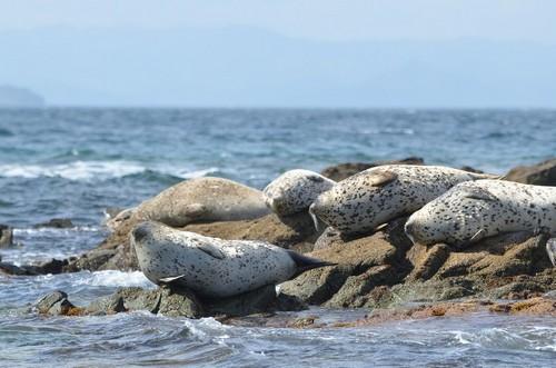 Κόρσακοφ: Στα βράχια της θάλασσας του αρχιπελάγους. Ιαπωνία.