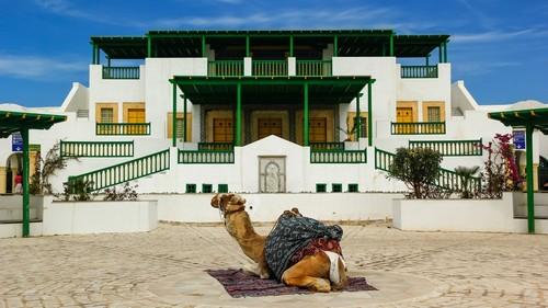 Λα Γκουλέτ (Τύνιδα): Η καμήλα περιμένει να φωτογραφηθεί με επιβάτες κρουαζιέρας. Λα Γκουλέτ. Τυνησία.