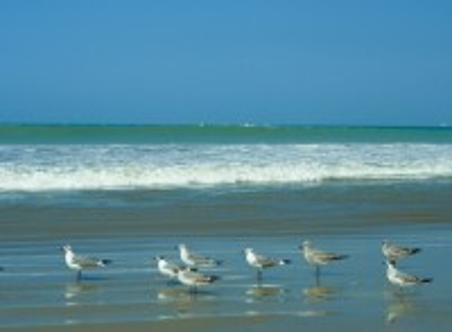 Μάντα: Θαλάσσια πτηνά στη Μάντα. Ισημερινός.
