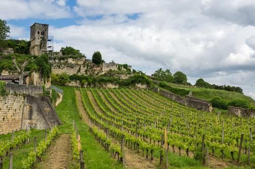 Μπορντό: Φωτογραφία από αμπέλια στο Σαιντ Εμιλιόν, κύρια περιοχή παραγωγής κόκκινου κρασιoύ. Μπορντό. Γαλλία.