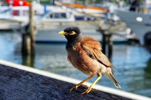 Νησιά Φίτζι & Νότιος Ειρηνικός (Pri 34b) - Πορτ Ντεναράου