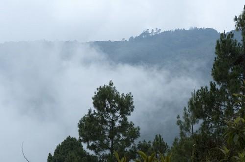 Πουέρτο Γκουετζάλ: Αινιγματικά και μυστηριώδη δάση της Κεντρικής Αμερικής. Πουέρτο Γκουετζάλ. Γουατεμάλα.